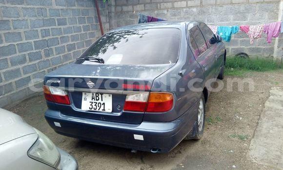 Buy Nissan Primera Blue Car in Chipata in Zambia